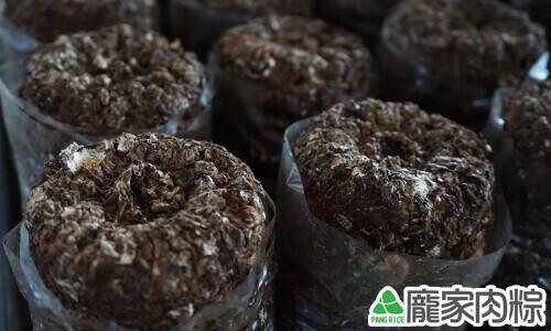 種植香菇的真空包