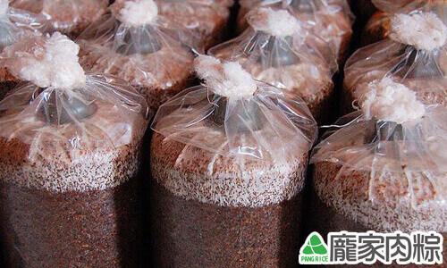 加入菇菌的真空包