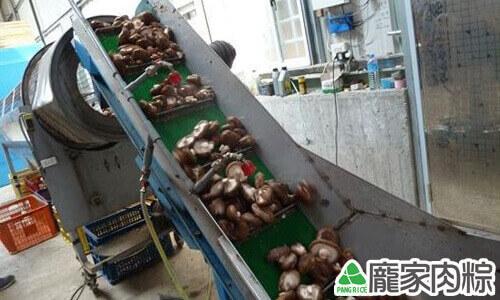 開始篩選香菇的大小