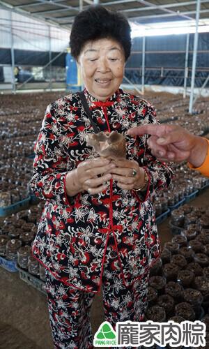 82-22菇農用心栽培的厚實香菇又大又好吃