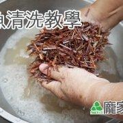 96-00包粽子魷魚清洗教學(肉粽知識推薦)