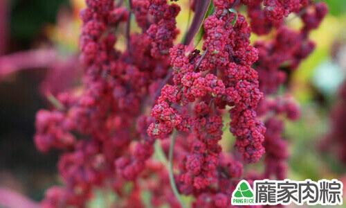 台灣紅藜皆為紅色外皮,所以被稱為紅藜