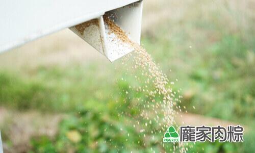 112-07穀物中的紅寶石,台灣紅藜生產過程(龐家肉粽端午節粽子食材介紹)
