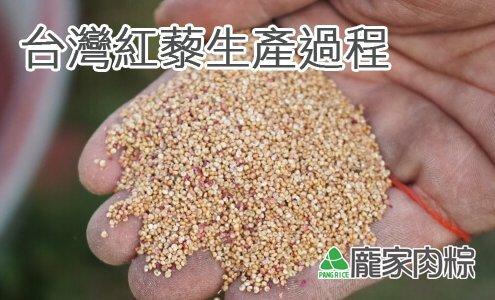 113-00穀物中的紅寶石,台灣紅藜生產過程(龐家肉粽端午節粽子食材介紹)
